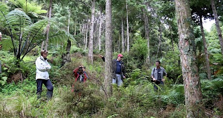 Northland Totara Working Group