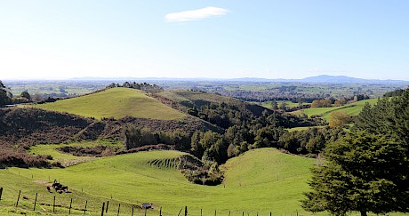 Landscape concept plan for afforestation of lowland Waikato hill country reserve