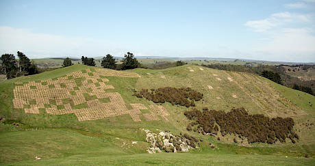 Performance of open-ground and container-raised natives planted on hill country, Lake Taupo catchment